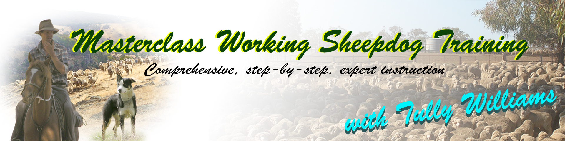 Working Sheepdog Training Masterclass videos header image