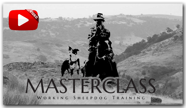 Masterclass Sheepdog Training Video