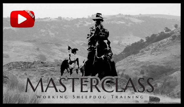 Masterclass Sheepdog Training Video